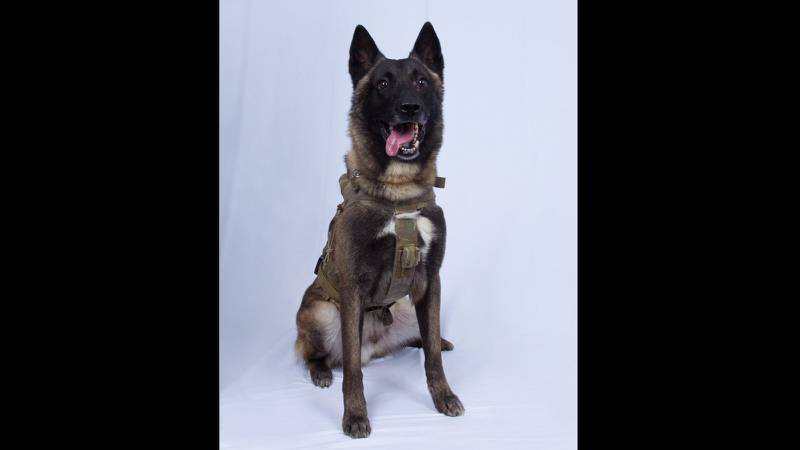 Baghdadi dog