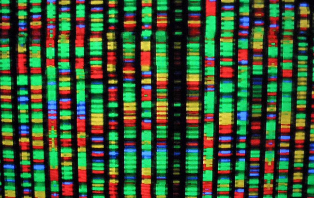 A digital representation of the human genome Aug. 15, 2001, at the American Museum of Natural History in New York City. Each color represents one the four chemical compenents of DNA.